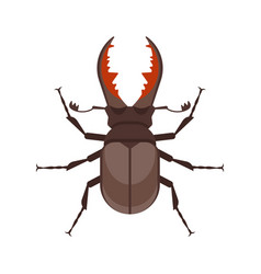 Flat style of stag beetle vector