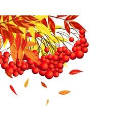 Autumn Rowan Frame vector image