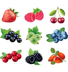 berry set vector image