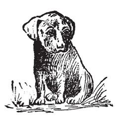 Pup vintage vector