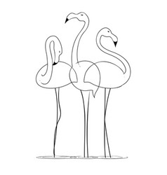 three graceful flamingos on a white background vector image