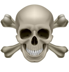Realistic skull and bones vector image