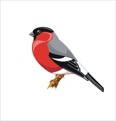 Bullfinch bird vector