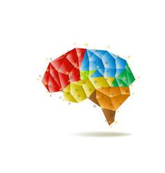 human brain anatomy structure vector image vector image