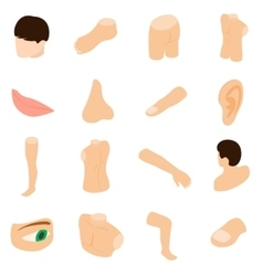 Body parts icons set isometric 3d style vector