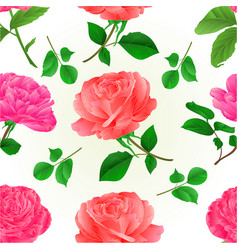 Seamless texture three flower pink roses vector