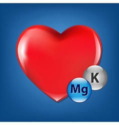 Red heart and vitamins vector