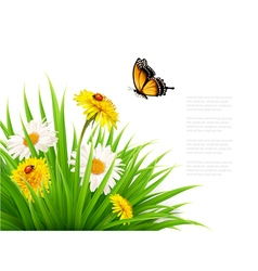 Nature summer background with daisy flower with vector image