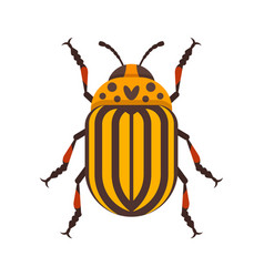 Flat style of colorado beetle vector