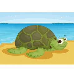 tortoise on sea shore vector image vector image
