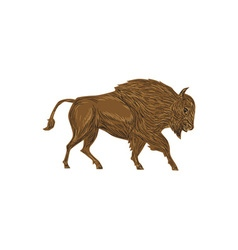 North american bison buffalo charging retro vector