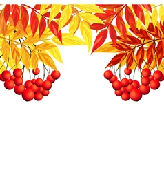 Autumn rowan frame vector