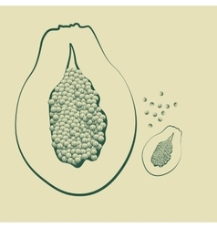 a papaya fruit with seeds vector image vector image