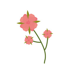 Flower geranium branch spring icon vector