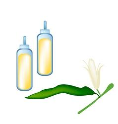 White michelia alba or michelia champaca on tree vector