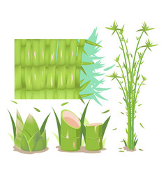 bamboo tree isolate collection set vector image