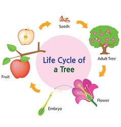 Lifecycle of a tree vector