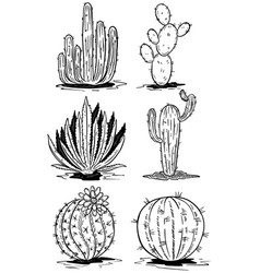 Set of cactus isolated on white background vector