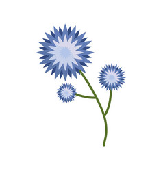 flower star branch spring icon vector image