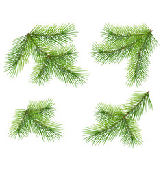 Set green pine branch isolated on white lush vector