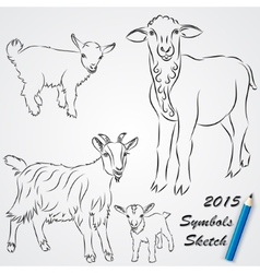 Sketch drawing of goats chinese 2015 new year vector