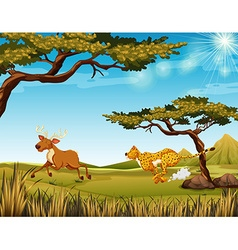 Tiger chasing a deer in the field vector