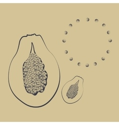 A papaya fruit with seeds vector