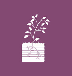 Icon plant and root vector