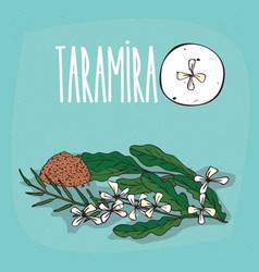 set of isolated plant taramira flowers herb vector image vector image