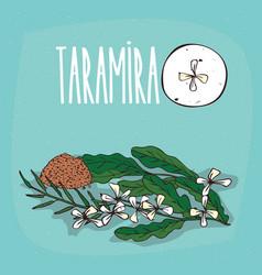 set of isolated plant taramira flowers herb vector image
