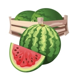 Watermelon harvest in wooden box isolated vector
