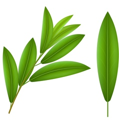 Olive twig vector image vector image