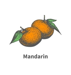 Drawing hand-drawn ripe juicy tangerine vector
