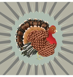 Cartoon turkey bird3 vector