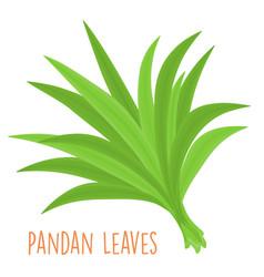 fresh green aromatic pandanus leaf vector image