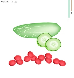 Fresh cucumber with vitamin k and minerals vector