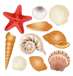 Seashells collection vector