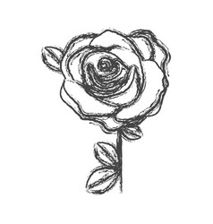 Blurred silhouette sketch flowered rose with vector