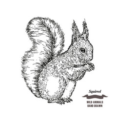 Forest animal squirrel hand drawn black ink vector