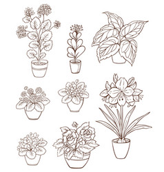 Set of various houseplants vector