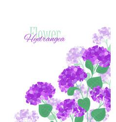 hydrangea flower vector image