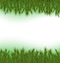 Fir Background vector image