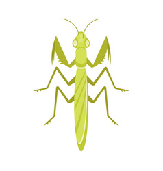flat style of mantis vector image