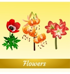 Three elegant different flower types vector