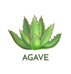Agave plant green flower logo colorful vector