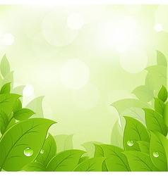 Fresh And Green Leaves vector image vector image