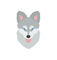 muzzle of a husky puppy with his tongue hanging vector image vector image