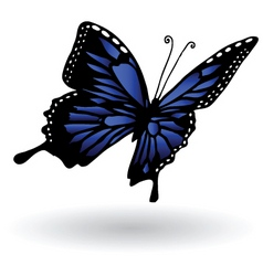 Blue butterfly vector