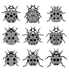 gray ladybugs vector image vector image