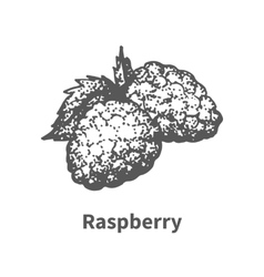 hand-drawn raspberry vector image vector image